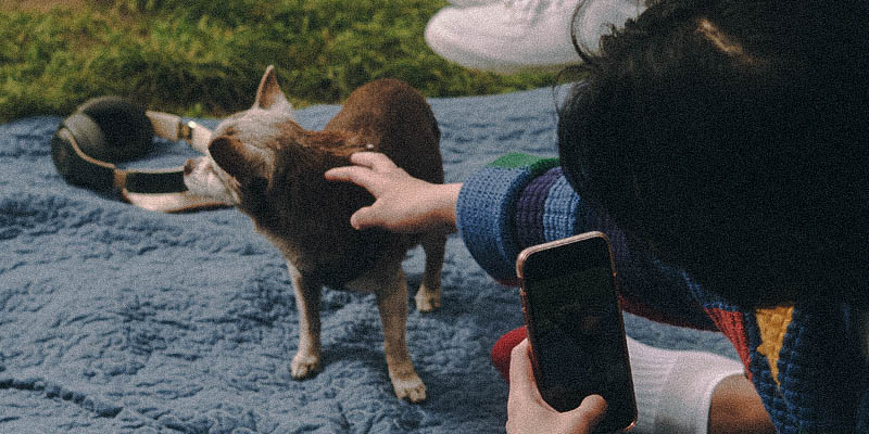 A non-binary trans man petting a dog in a park
